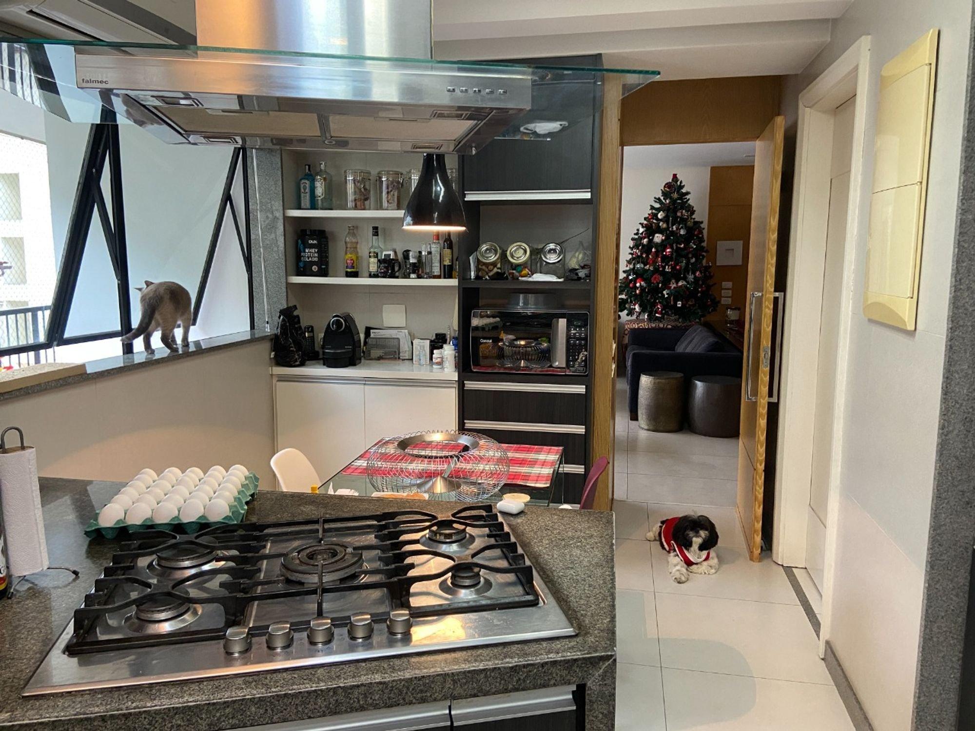 Foto de Cozinha com vaso de planta, forno, cadeira, mesa de jantar, sofá, garrafa, tigela, cão, xícara