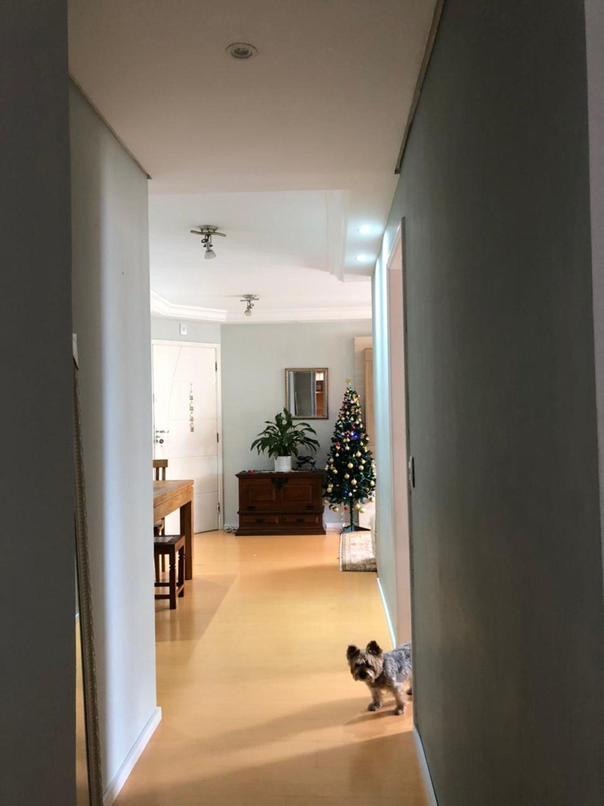 Foto de Sala com vaso de planta, cão